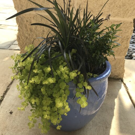 Container_Plants_Combination_Patio_Bowls
